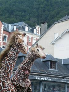 Girafe déambulation échassier en Gironde